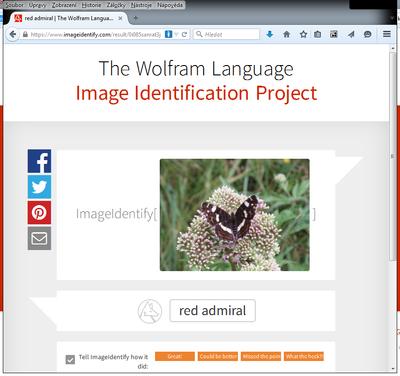 Obrazek 6 - Wolfram-IIP-babocka.png
